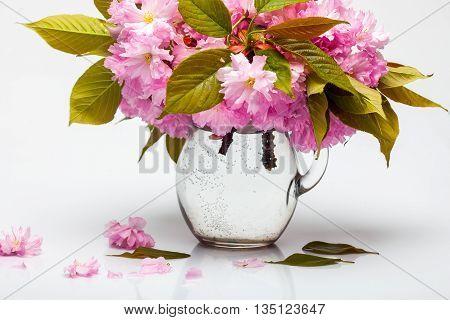 Sakura Flowers In Glass Pitcher