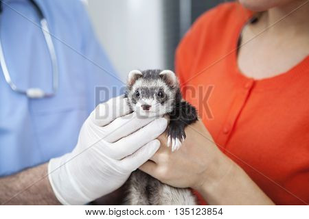 Cropped Image Of Woman And Doctor Holding Weasel