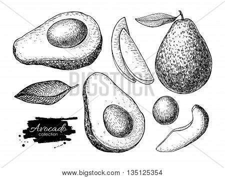 Vector hand drawn avocado set. Whole avocado sliced pieces half leaf and seed sketch. Tropical summer fruit engraved style illustration. Detailed food drawing. Great for label poster print