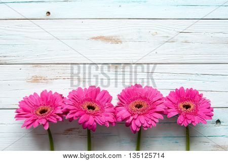 Pink daisies on a wooden backdrop with space