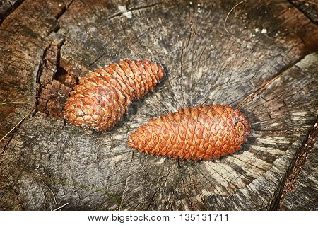 Two Fir Cones on the Old Stump