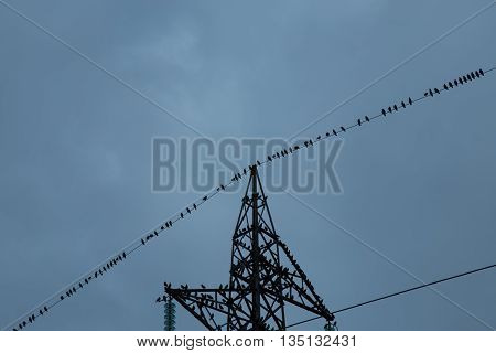 High tension pylon with birds on wires