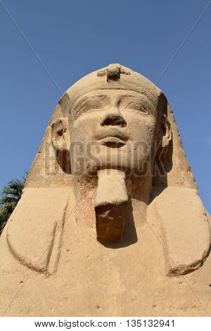 The road of the Sphinx from Luxor in Egypt