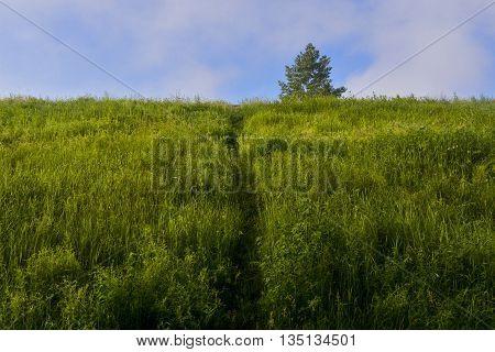 trodden path through the tall grass leading to the mountain