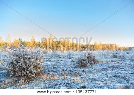 Frosts In The Autumn Forest In The Early Morning