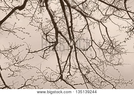 Abstract sepia background with trees branches silhouettes