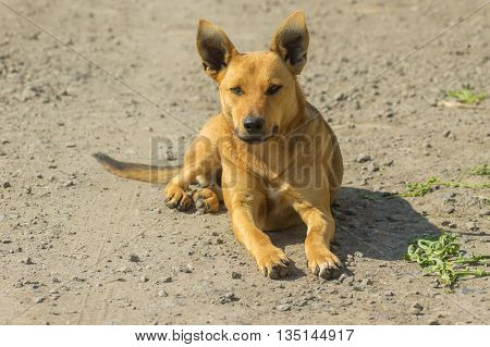 Outdoor portrait of graceful stray female dog lying on the ground