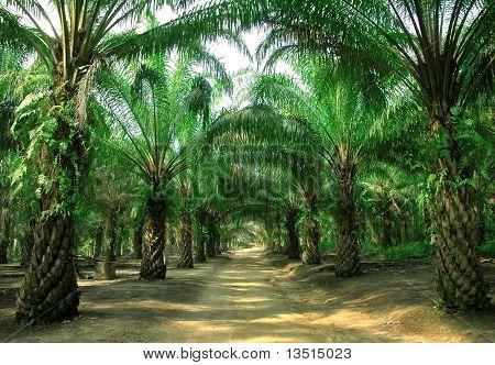 way in plantation