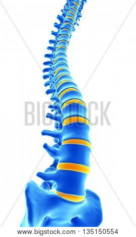 3d rendered, medically accurate illustration of the human spine