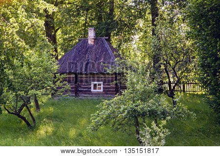 old log house with one window, surrounded by trees in the summer
