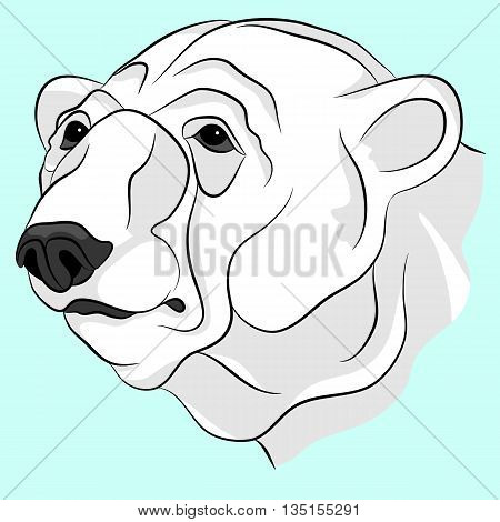 bear white adult head face vector illustration