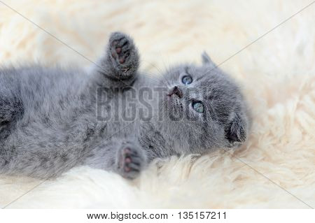 Kitten On White Blanket