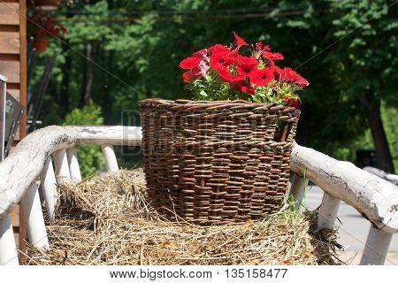 beautiful red flowers in a straw basket on the cart