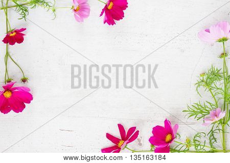 Cosmos fresh flowers frame on white wooden table