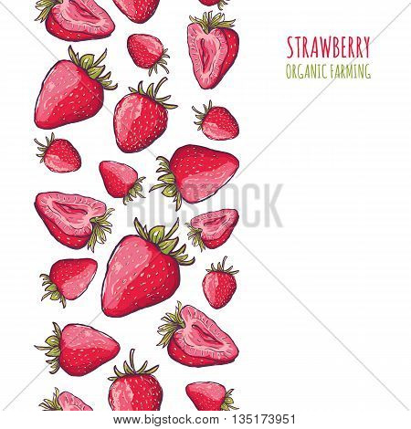 Vector Seamless Vertical Background With Red Strawberries. Hand Draw Background With Berries. Banner