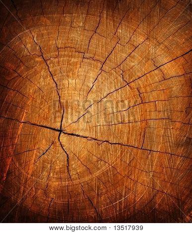 textura de tocón de árbol