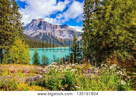 Solar cool morning in Rocky Mountains. Blossoming glade in the forest on Emerald Lake. Yoho National Park, Canada