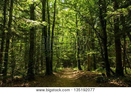 Path in a temperate forest in Brittany, France