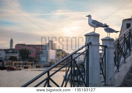 Seagull on the top of the stone stairs