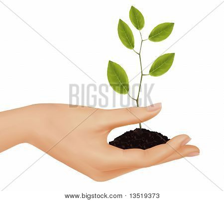 Person holding a young plant. Business concept.Vector illustration.