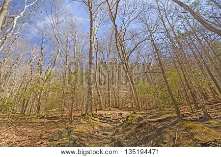 Heading up Mountain Trail in Early Spring in the Great Smoky Mountains in Tennessee