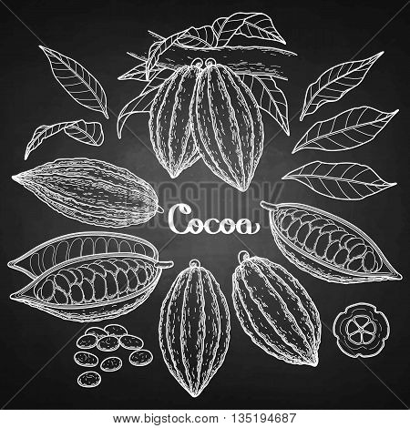 Graphic cocoa fruit collection isolated on chalkboard. Vector exotic cacao plants