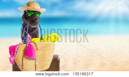 Funny summer black dog with summer accessories. Funny summer concept.