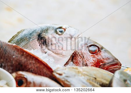 Close Up Of Delicious Fresh Fish On Ice On Market Store Shop. Dorado Fish On Ice - Healthy Food. National Spanish Cuisine.