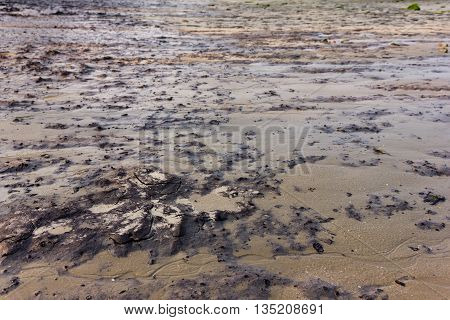 coastal areas are filled with mud and muddy soil.