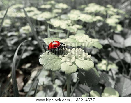 This is only a ladybird. Nothing more.
