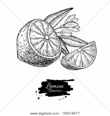 Vector hand drawn lemon or lime fruit with flower and leaf on branch. Tropical summer fruit engraved style illustration. Detailed citrus drawing. Great for water juice detox drink natural cosmetics