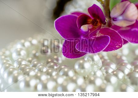 purple orchid on the background of pearl and white glass