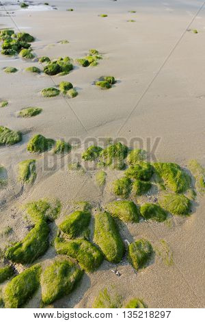 Coastal areas are filled with lichen stones arranged
