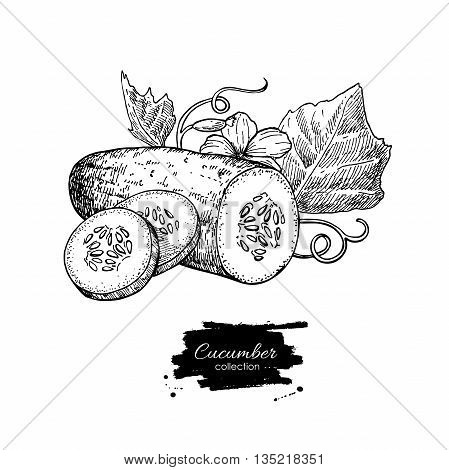 Cucumber hand drawn vector. Isolated cucumber sliced pieces and plant. Vegetable engraved style illustration. Detailed vegetarian food drawing. Farm market product.