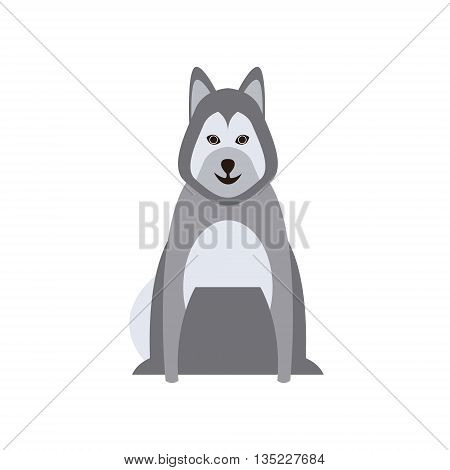 Malamute Dog Breed Primitive Cartoon Illustration In Simplified Vector Design Isolated On White Background