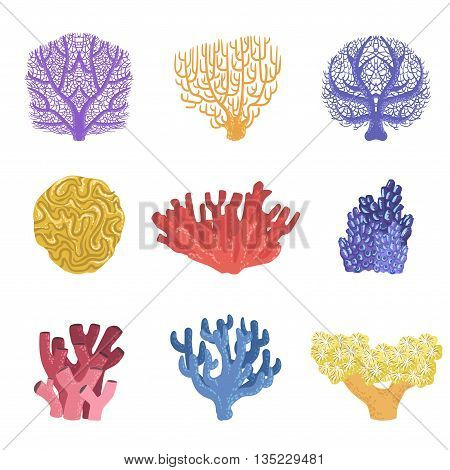 Different Types Of Tropical Reef Coral Set Of Detailed Realistic Vector Illustrations On White Background
