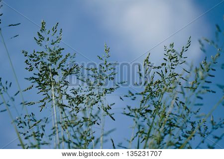 Grass Closeup With Sunbeams.