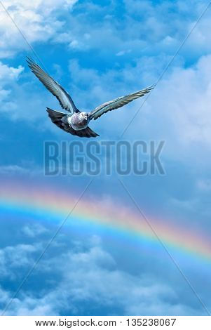 Dove in the air with wings wide open symbol of faith vertical image