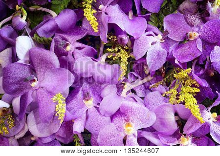 Purple orchids in the garden for background.