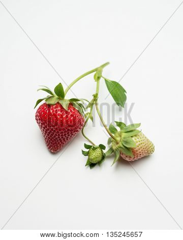 Ripe and unripe strawberries on a stem
