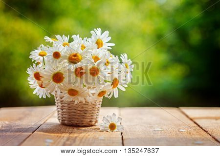 Bouquet of camomile flowers on wood table in nature green background, in summer morning.