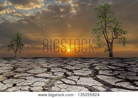 Trees are the only two on the ground parched and barren with beautiful sunset.