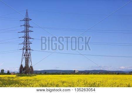 Electrical net of poles on blue sky and meadow yellow rape