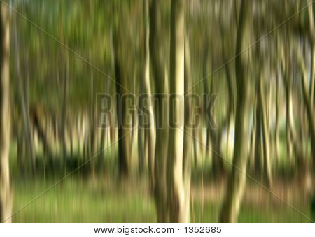 Forestry Blurred Background