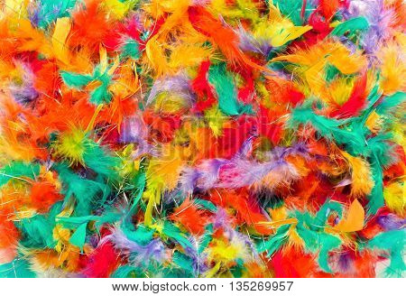 Background texture of colorful feathers for a celebration craft work or decoration in a full frame view in the colors of the rainbow