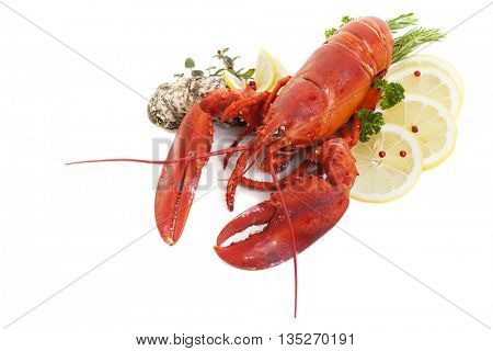 Lobster and oysters studio shot with shadows on white background