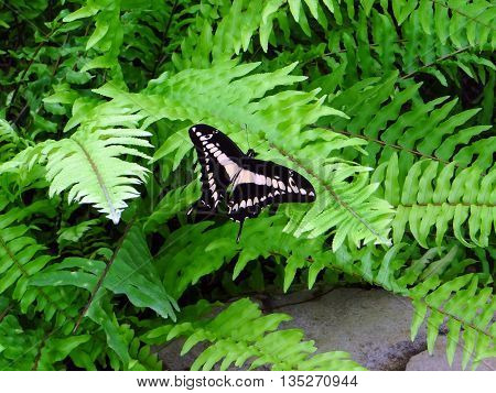 Motley butterfly sitting on a green leaves