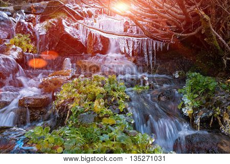 Rapid Mountain Creek Blurred Pristine Water Flow Grass Covered by Ice Armor and Icicles Hanging on Tree Branch and colorful Sunbeams