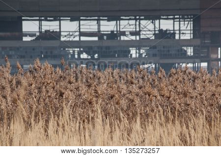 wheat field abandoned factory day background agriculture