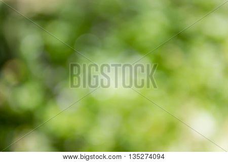 Fresh Summer Colour Green Tone Soft Bokeh Abstract Nature Tree Bush Background